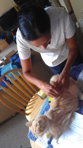 Acupuncture-Cat-Ace-Dr-Vindhya-Cianelli-2