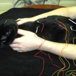Jamie-Electro-Acupuncture-Reiki-2