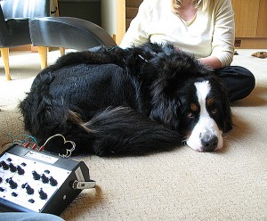 animal-acupuncture-electro-acupuncture-2