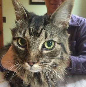 cat-animal-acupuncture-ike