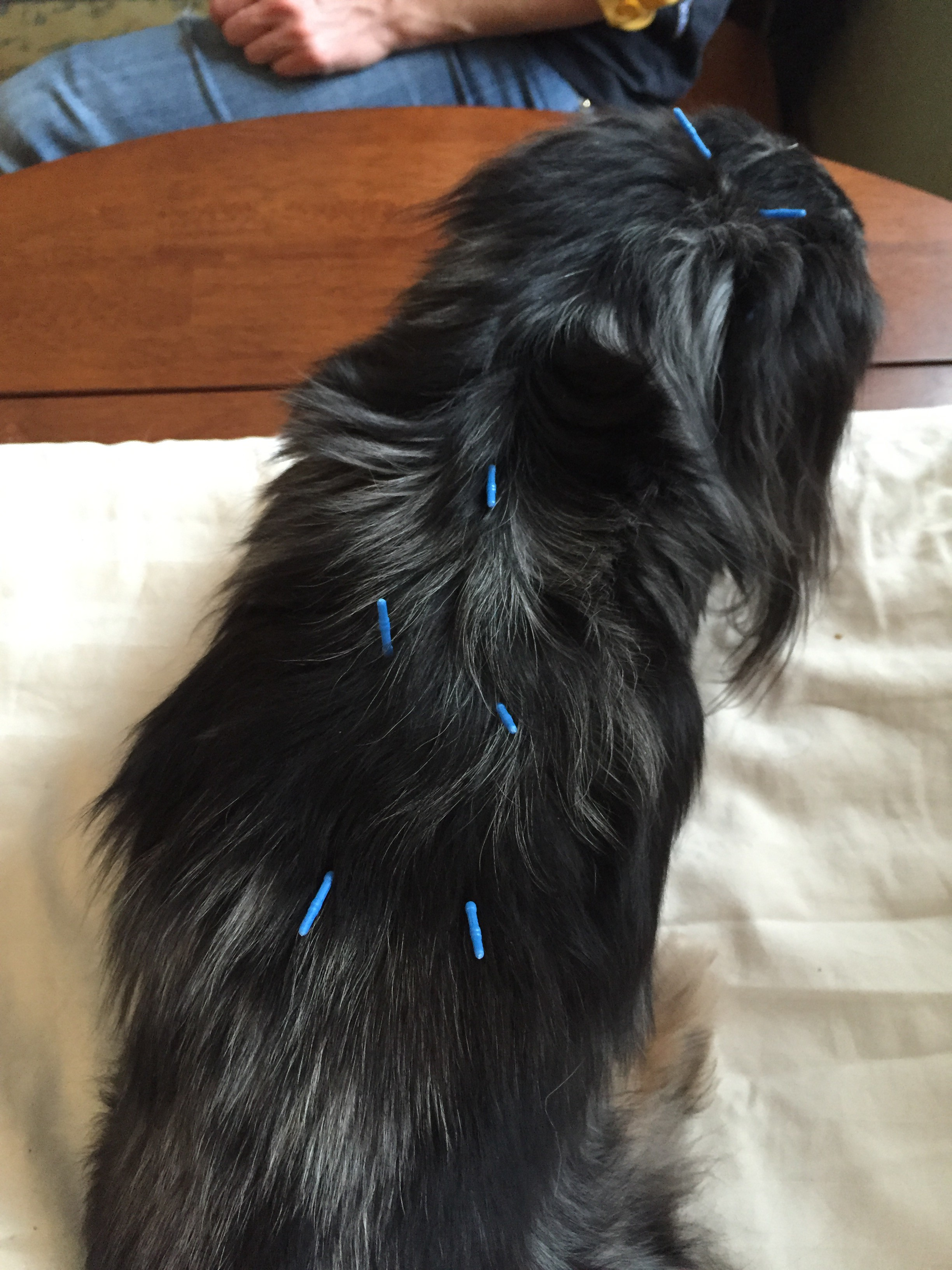 Treating Cats And Dogs With Acupuncture